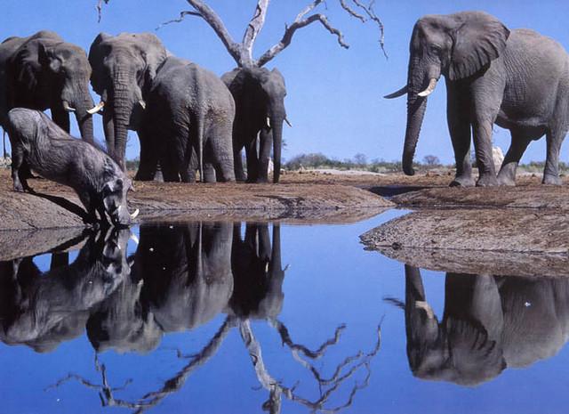 Elefanter ved vannhullet