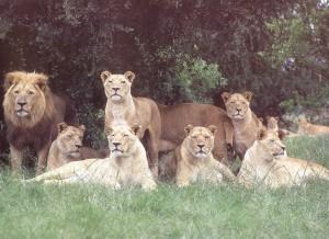 Family seven