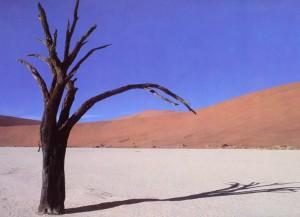 Tørke 1