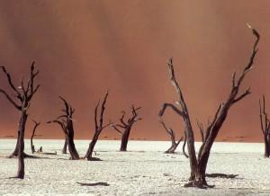 Tørke 2